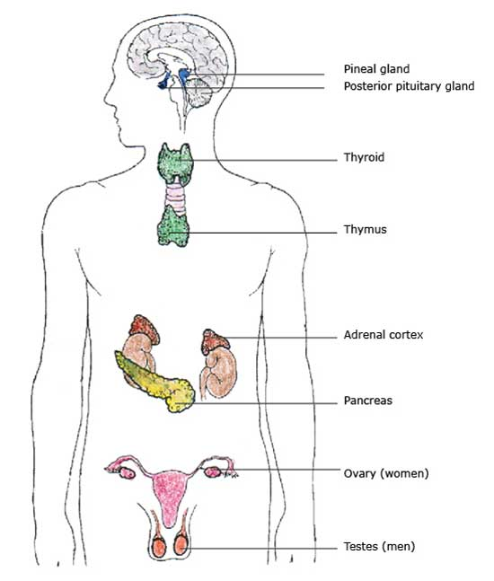 Thyroid & Glands